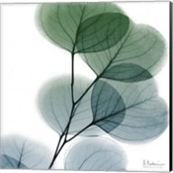Dull Eucalyptus Fine-Art Print
