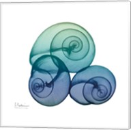 Sea Sky Snails Fine-Art Print
