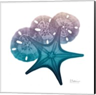 Ocean Hues Starfish and Sand Dollar Fine-Art Print