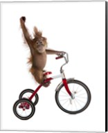 Monkeys Riding Bikes #2 Fine-Art Print