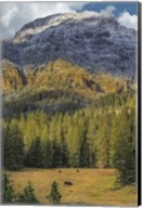 Bison Grazing In The Yellowstone Grand Landscape Fine-Art Print