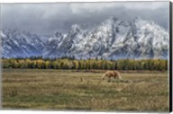 Fine Dining In The Tetons Fine-Art Print