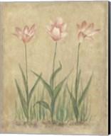 Blooming Tulips II Fine-Art Print