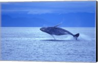 Whale Jumping out of Ocean Fine-Art Print