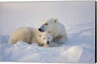 Polar Bears Huddled Together Fine-Art Print