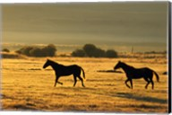 Horses Running at Sunset Fine-Art Print