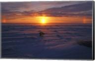 Lone Polar Bear Against Sunset Fine-Art Print