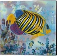 Regal Angel Fish Fine-Art Print