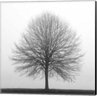 Winter Trio I Fine-Art Print