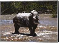 White Rhino Fine-Art Print