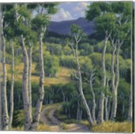 Summer Aspen Fine-Art Print