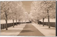 Fence & Trees #2, Kentucky 08 Fine-Art Print