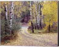 Birch Tree DriveFence & Road, Santa Fe, New Mexico 06 Fine-Art Print