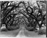Path In The Oaks #2, Louisiana Fine-Art Print