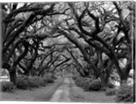Path In The Oaks #2, Louisiana Fine-Art Print