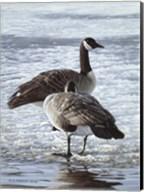 Freeze Up- Canada Geese Fine-Art Print