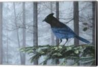 Stellers Jay In Fog Fine-Art Print