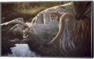 Creekside Cougar Fine-Art Print