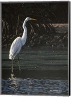 Great Egret Fine-Art Print