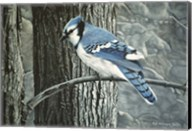 Backyard Jay Fine-Art Print