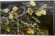 Song Sparrow On Salal Fine-Art Print