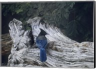 Driftwood 2 Fine-Art Print