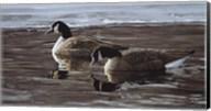 A Break In The Ice- Canada Geese Fine-Art Print