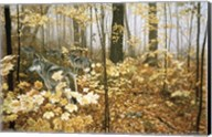 Autumn Maples - Wolves Fine-Art Print