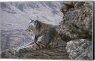Resting Bobcat Fine-Art Print
