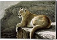Rimrock - Cougar Fine-Art Print