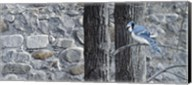 Autumn Blue Jay Fine-Art Print