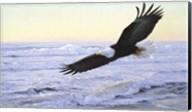 Ocean Dawn- Eagle Fine-Art Print