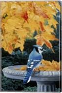 Autumn Birdbath Fine-Art Print
