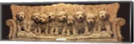 Golden Pup Line-Up Fine-Art Print