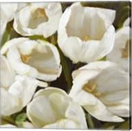 Bianco I Fine-Art Print