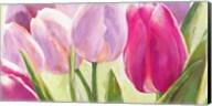 Tulipes I Fine-Art Print