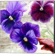 Pansies II Fine-Art Print