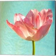 Pink Tulip Fine-Art Print