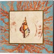 Coral Medley Shell IV Fine-Art Print