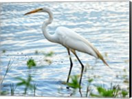 By The Lake Egret Fine-Art Print