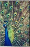Royally Blue I Fine-Art Print