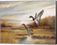 Mallards Fine-Art Print