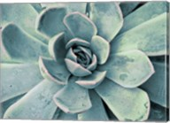 Teal Succulent Fine-Art Print