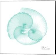 Seafoam Argonaut Fine-Art Print