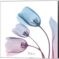 Soft Tulips Rose Serenity Fine-Art Print