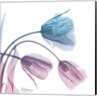 Tulips Rose Serenity Fine-Art Print