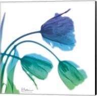 Tulips L83 Turq Blue Fine-Art Print
