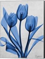 Midnight Tulips 2 Fine-Art Print