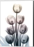 Springing Tulips Fine-Art Print