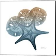 Steel Hues Starfish and Sand Dollar Fine-Art Print